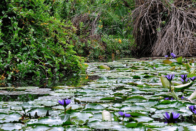 Lowveld National Botanical Garden