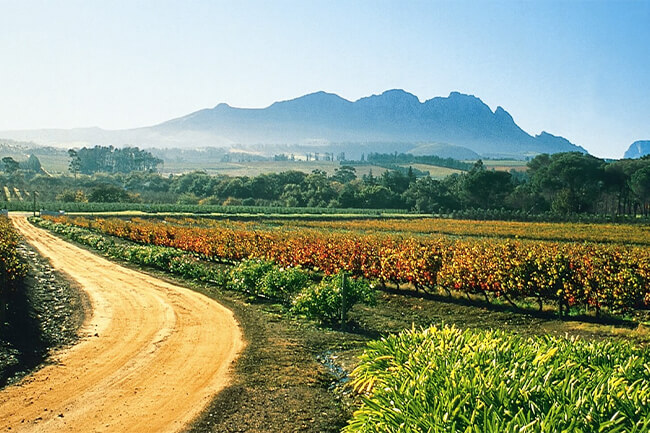 Durbanville Wine Route